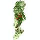 دانلود نقشه شیپ فایل آمار جمعیت نقاط شهری و نقاط روستایی شهرستان بابل از سال 1335 تا 1395