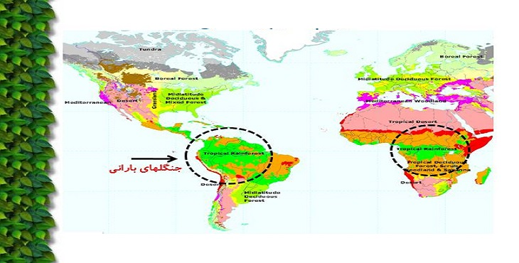دانلود پاورپوینت جنگلهاي مناطق استوايي(حاره اي)
